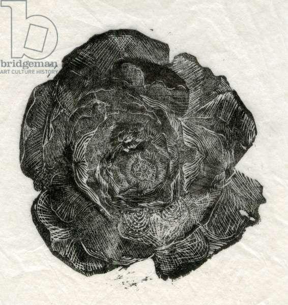 Pine Rose, 2014, (wood engraving on paper)