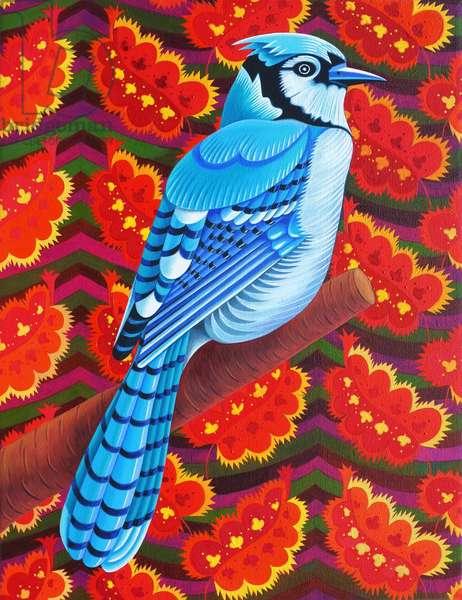 Blue Jay, 2016, (oil on canvas)
