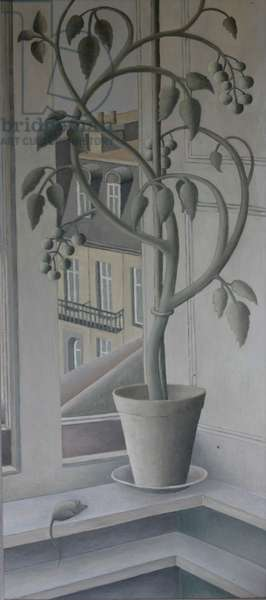 Plant in Window,