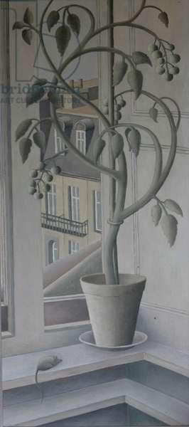 Plant in Window,