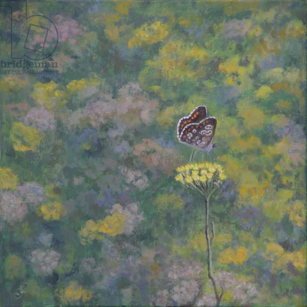 Brown Argus (after photo by Sara Crow), (oil on canvas)