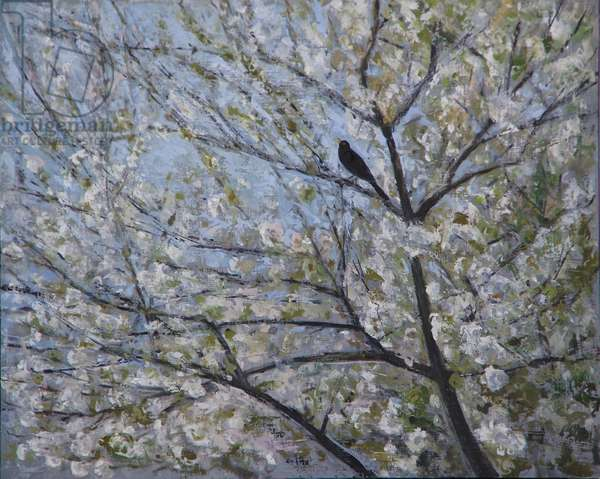 Blackbird Singing in Cherry Blossom