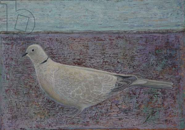 I am the Collared Dove, 2016 (oil on wood)
