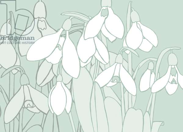 Snowdrops, 2017, (digital)