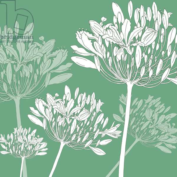 Agapanthus breeze, 2005 (digital)