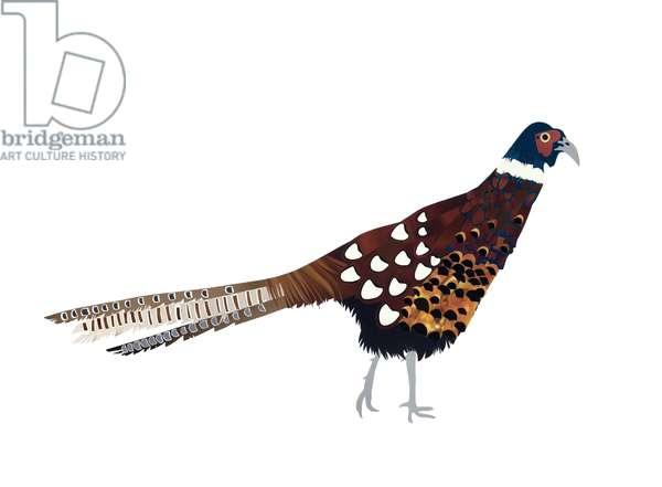 Pheasant, 2013, (cut paper)