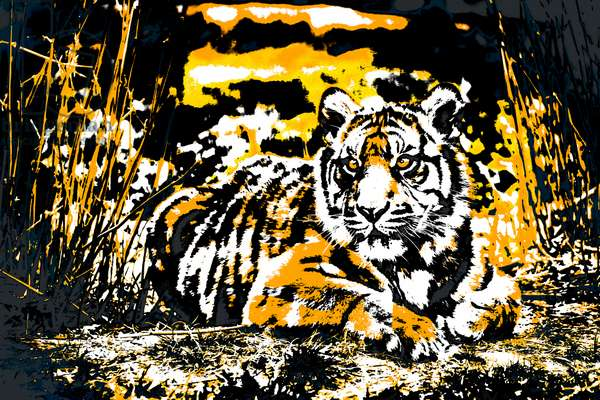 Year of the Tiger (6), 2021 (painted photograph)