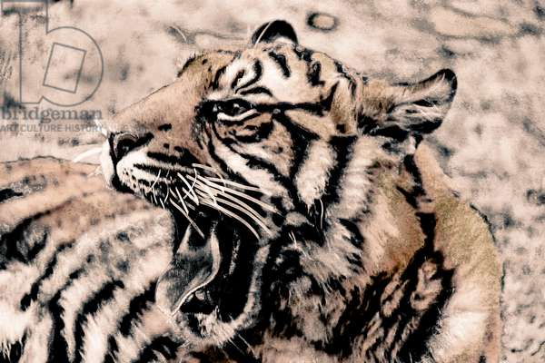 Year of the Tiger (1), 2021 (painted photograph)