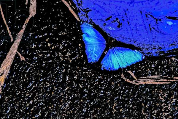 By the Urn, from the series, Butterfly Farm, 2013, (repainted photograph)
