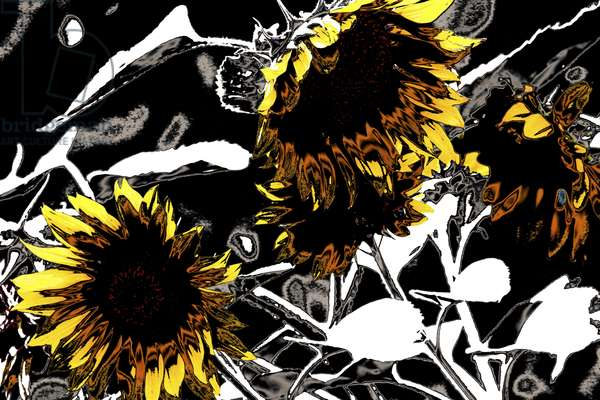 Four Sunflowers, from the series Sunflowers, 2012, (repainted photograph)