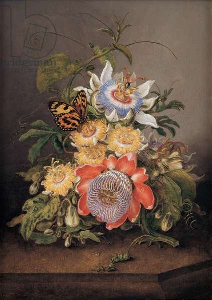 Passionflowers, 1812 (oil on wood panel)