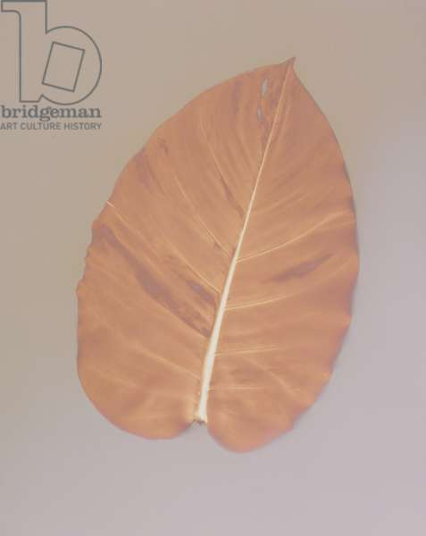 Big Red Leaf (photogram)
