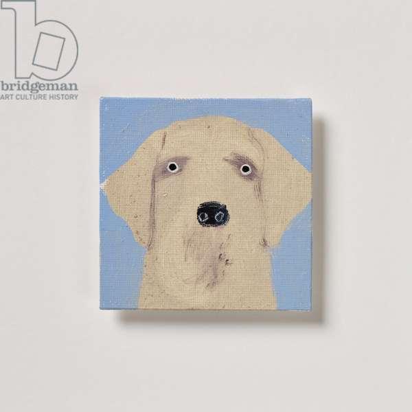 Labrador, 2020 (oil on canvas)