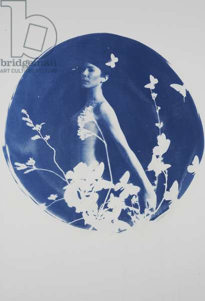 Siren No. 2, 2014, (cyanotype on paper)