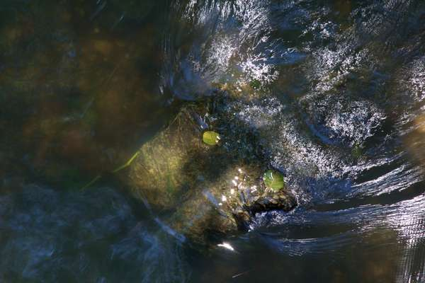 Rushing Waters #6