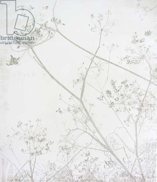 Queen Anne's Lace, 2013 (oil and gesso on canvas)