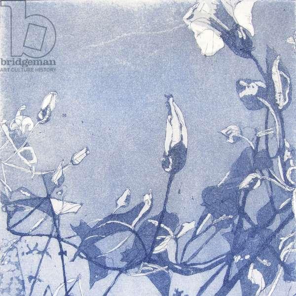 Bindweed, 2013 (etching)