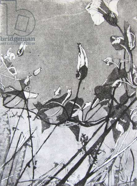 Bindweed, 2013 (etching)