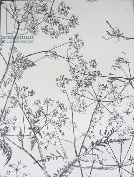 Queen Anne's Lace, 2013 (etching)
