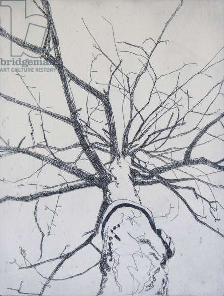 Fettered Tree, 2012 (etching)