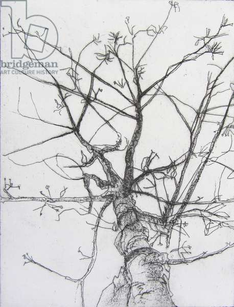 Free Tree, 2012 (etching)