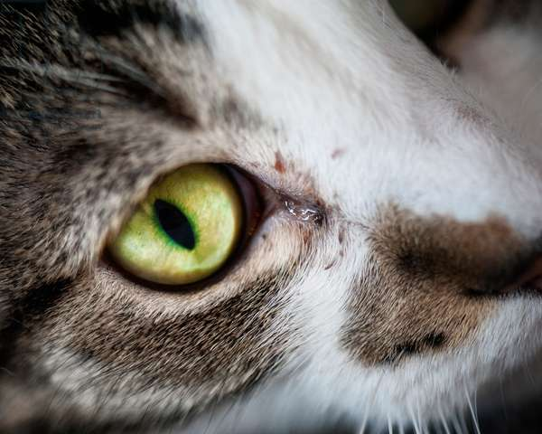 Weeping Cat's Eye, 2020, (photograph)