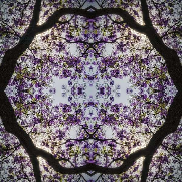 Lilac Tree, 2015, (digital image)