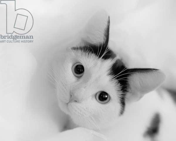 Kitten in tissue, 2020, (photograph)