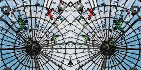 Butterfly cage, 2014 (digital image)