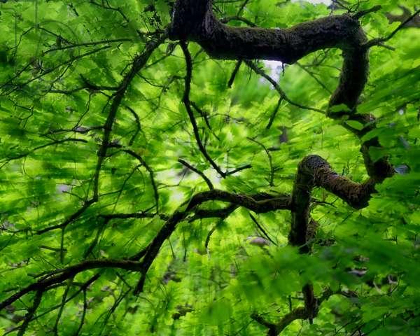 Tree Branch in Canopy, 2020 (digital image)