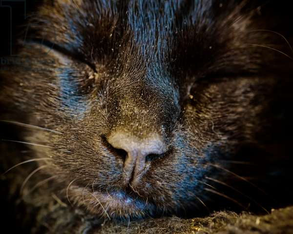 Black Cat Sleeps, 2020, (photograph)