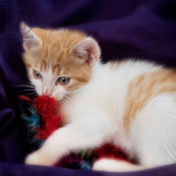 Kitten with Red Feather, 2020, (photograph)