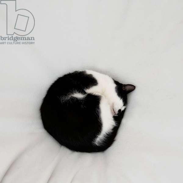 Cat as dot, 2020, (photograph)