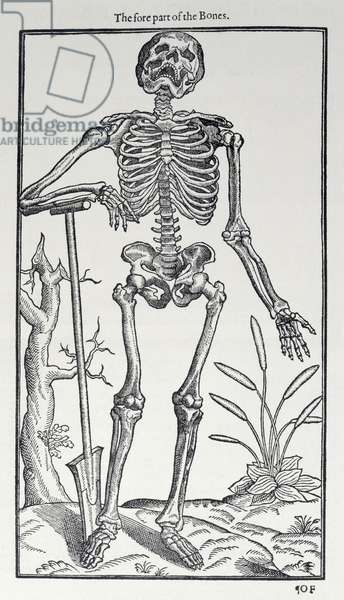 The Fore Part of the Bones, plate from 'The Historie of Man' published by John Banister (1540-1610), 1578 (engraving)