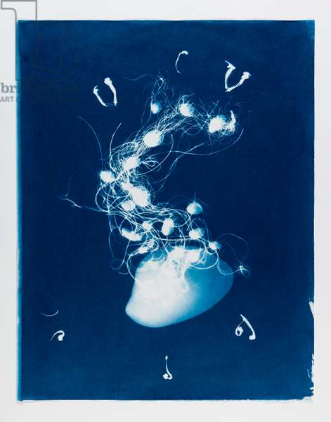 Out of the Blue 3, 2020, (cyanotype)