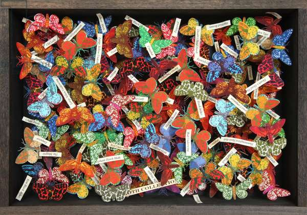 Moth Collection (with names), 2015 (box construction)