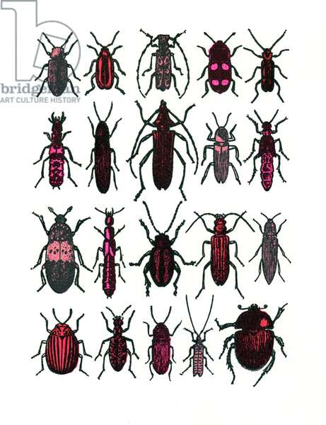 Beetles- red, 2013, (screen print)