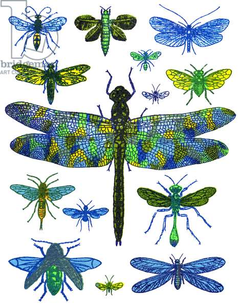 Dragonfly, 2016 (screen print)
