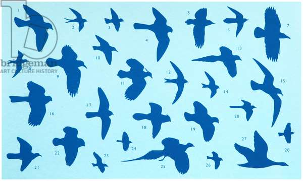 Birds in Flight, 2012, (screen print)