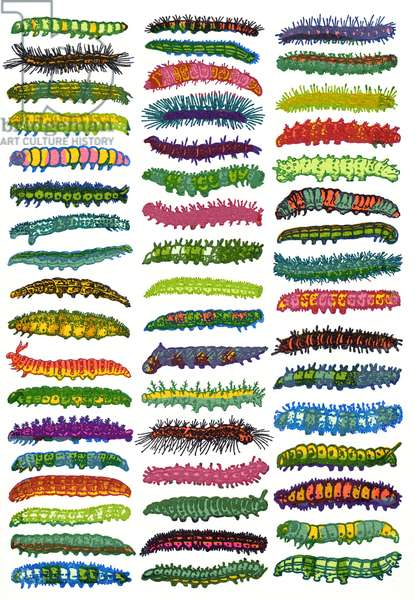 Caterpillars, 2009, (screen print)