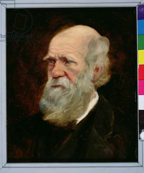 Portrait of Charles Robert Darwin (1809-82) English naturalist (oil on panel)
