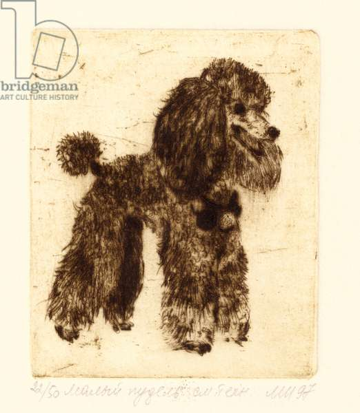 Medium Poodle, 1995 (drypoint)