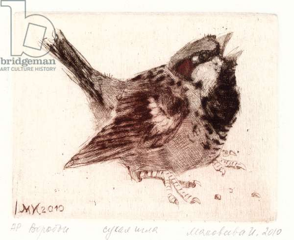 House Sparrow (Passer domesticus), 2010 (drypoint)