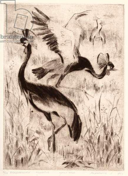 Black-Crowned Crane (Balearica pavonina), 1987 (mezzotint)