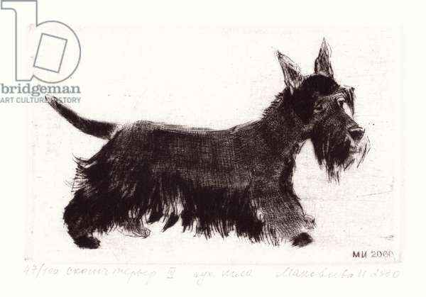 Scotch Terrier, 2000 (drypoint)
