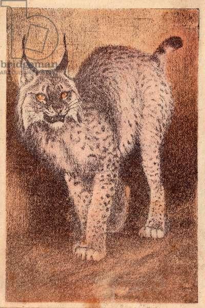 Lynx, 1939 (lithograph)