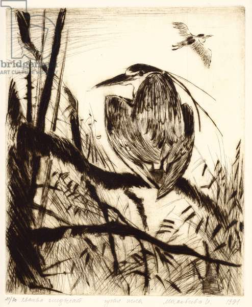 Resting Heron, 1990 (drypoint)