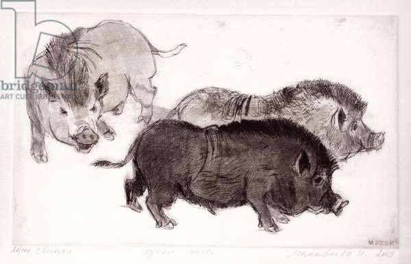 Pigs, 2009 (drypoint)