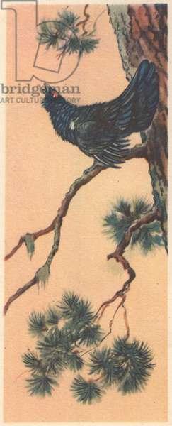 Wood-grouse, 1954 (colour litho)