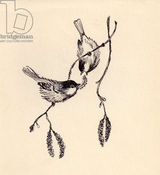 Birds Sharing a Caterpillar, 1954 (indian ink on paper)
